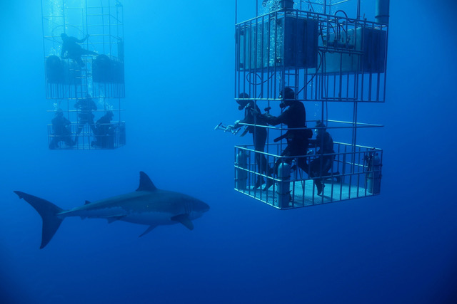 OceanLab - shark-cagesLRG